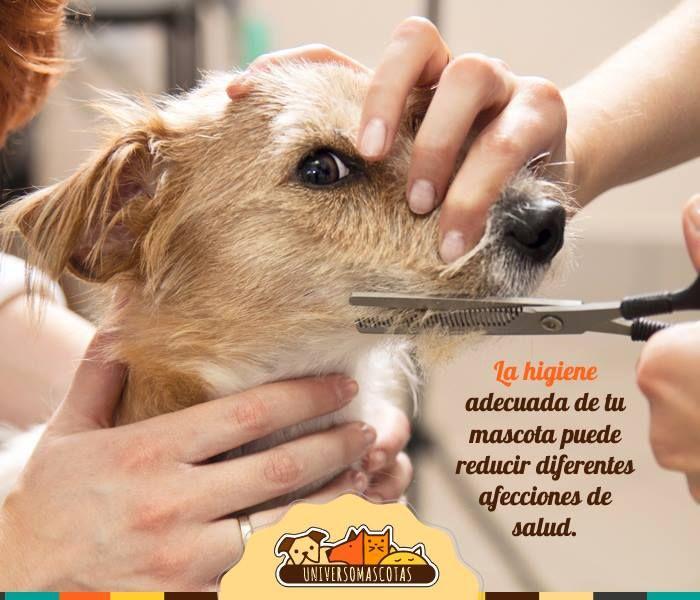 Conoce los 6 cuidados básicos de higiene para tu perro aquí: http://www.universomascotas.co/bienestar/perros/como-debo-mantener-la-higiene-de-mi-perro