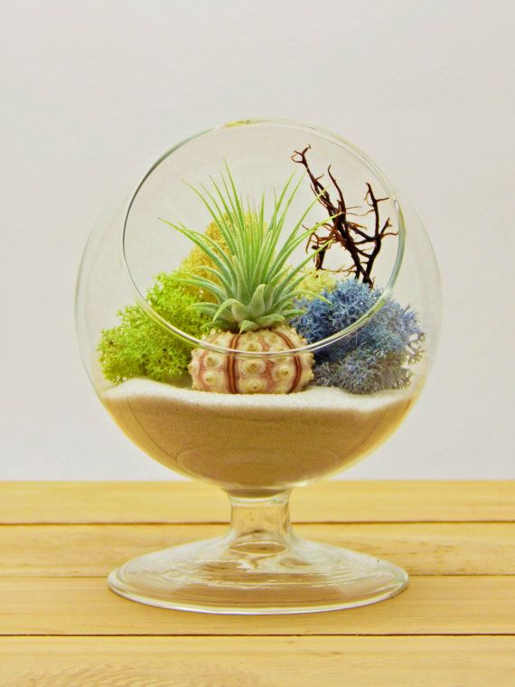 This living art is sure to be a conversation starter. This pedestal terrarium is extremely easy to care for. Air Plants need to be dipped in water once a week and need bright indirect light. They will do well in office lighting or near a bright window. Everything is included to recreate this lovely terrarium! Perfect plants for the active modern lifestyle!  This listing will include the following: 1 - 5 x 4 Round Pedestal Glass 1 - Air Plant Ionantha 1 - Bag of Natural White Sand 1 - Sea…