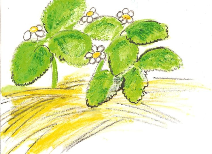 Strawberry Plant Care for Winter | Garden Guides