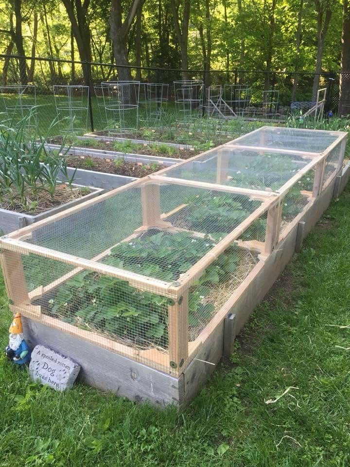 Vegetable Garden Planter Box Mesh Lath With Images Vegetable