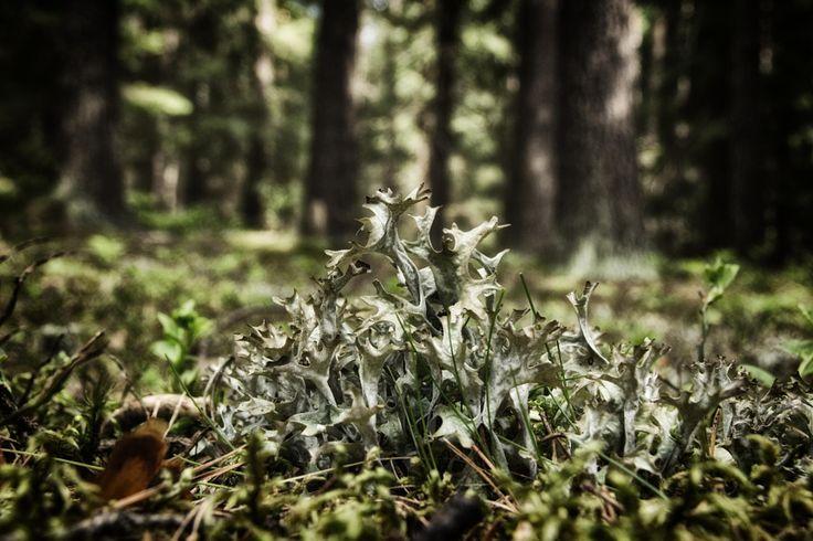 Lichen by Karin Pezel