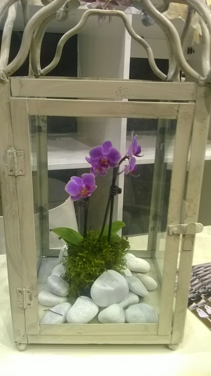 Orchidea Gardenexpo 2014