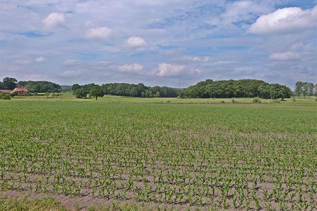Fotostrecken - Wetter Bilder und Fotos - WetterOnline Verkümmertes Maisfeld im Landkreis Osnabrück. Diese Maispflanzen werden es wohl nicht mehr schaffen. Bild: Michael Schaefer