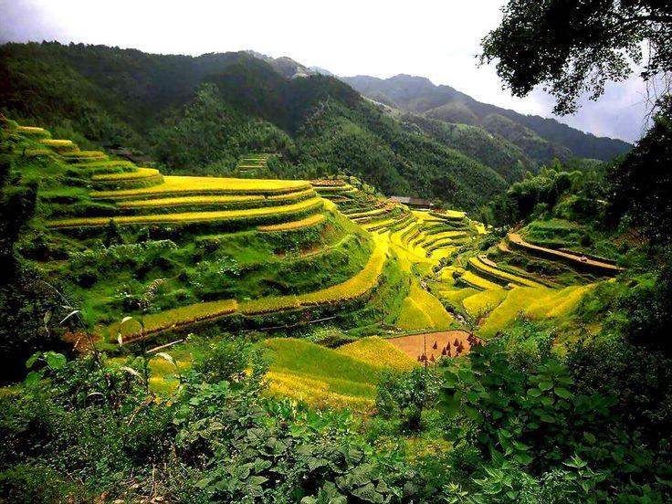 Rice terraces in Guangxi China