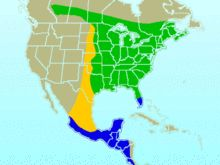 Hummingbirds:Green=summer only, Yellow=migratory path, blue=winter only