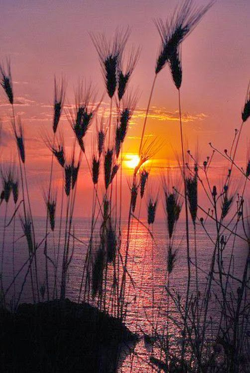 Spikelets at Sunset – Amazing Pictures - Amazing Travel Pictures with Maps for All Around the World