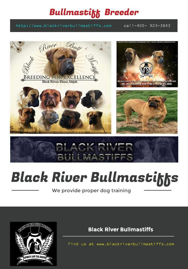 Find the Bullmastiff  Breeder and Bullmastiff Puppy from world's No.1 seller Black River Bullmastiffs, In which you can find large dogs and puppies with proper training  at an affordable price rate, For more info call at 405- 923-3843