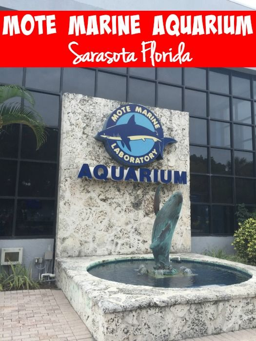 Our visit to Mote Marine Aquarium in Sarasota Florida. Manatees, Turtles, baby seahorses, baby jellyfish and more!