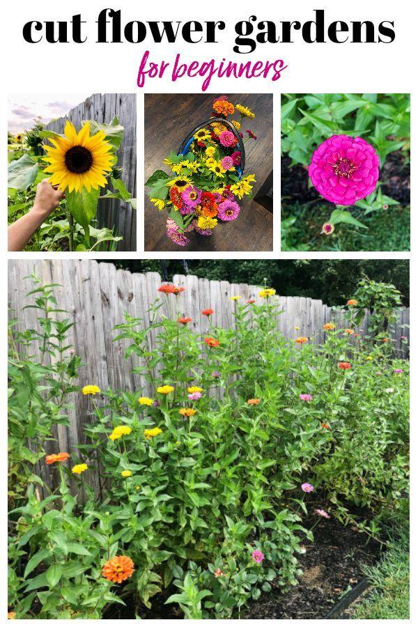 Erstellen eines Schnittblumengartens für Anfänger  – Rain on a Tin Roof Projec… – Garten
