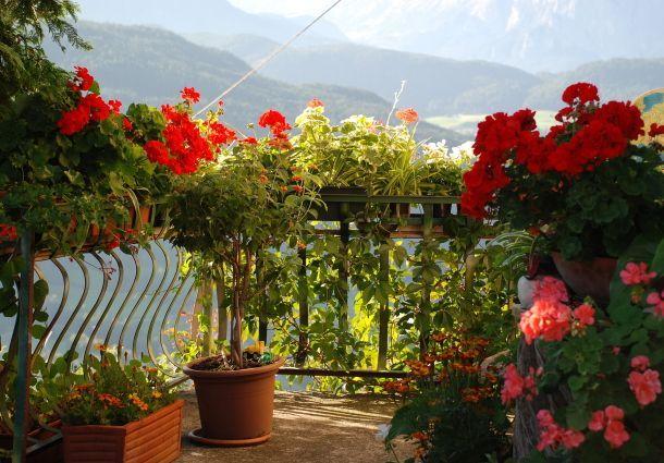 Blumen für den Balkon im Schatten: Blühen im Dunkeln