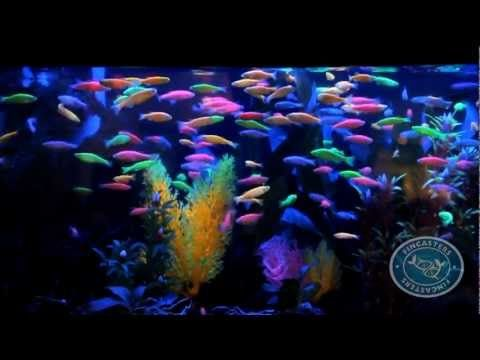 1000 images about glo fish ideas on pinterest dna glow