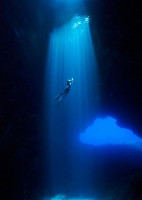 Stunning underwater photography! The graduated blue because of the light is a great colour idea.
