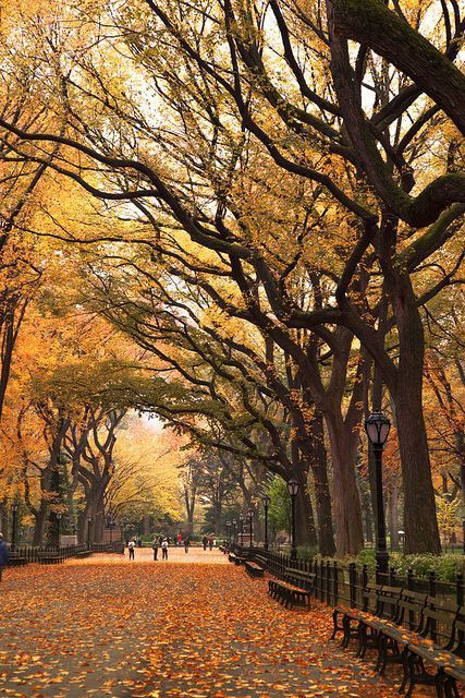 'Autumn Stroll', United States, New York, New York City, Central Park, Mall Area: