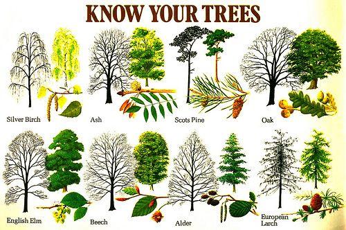 Tree (& leaf) identification by shape
