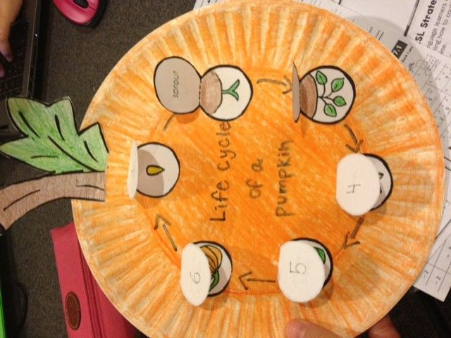 Life Cycle of a pumpkin science lesson. Before doing this activity read a book…