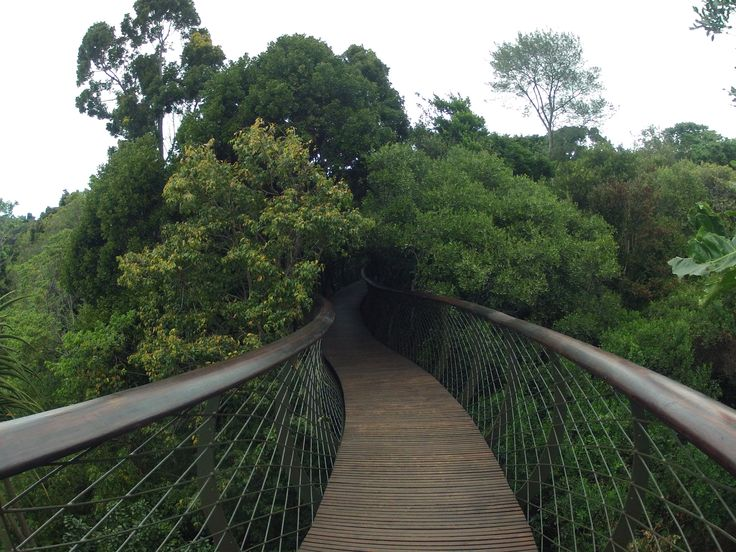 The treetop walkway at Kirstenbosch Botanical Gardens, Cape Town. It's so pretty up there.
