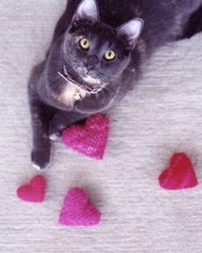 There isn't a kitten that wouldn't purr over a catnip-filled knitted pillow. The toys are also packed with wool stuffing and a jingle bell.: Valentine Day, Jingle Belle, Catnip Toys, Crazy Cat, Catnip Heart, Martha Stewart, Knits Catnip, Kitty, Cat Toys