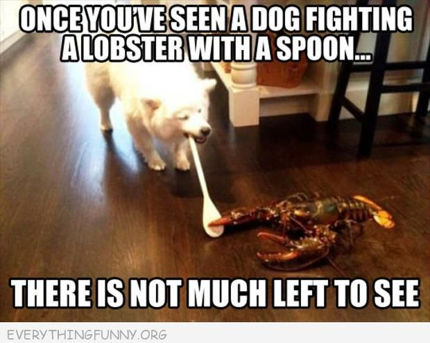 funny caption picture dog with spoon fighting with a lobster
