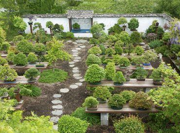 Bonsai Haus 32 best bonsai images on bonsai bonsai garden and