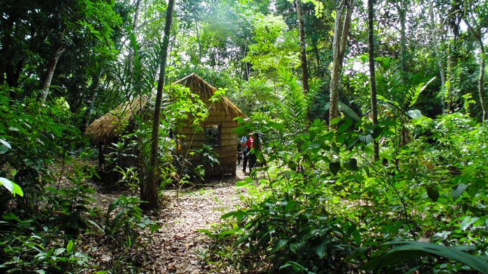 Hundreds of years later, plants domesticated by ancient civilizations still dominate in the Amazon | Science | AAAS