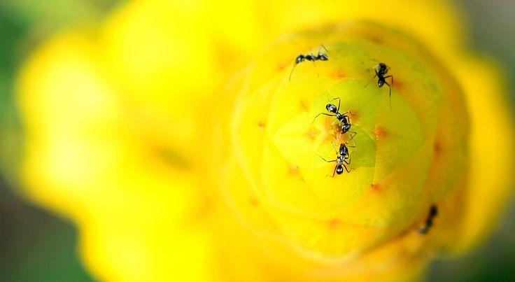 semut aja suka warnanya yang cerah, apalagi aku