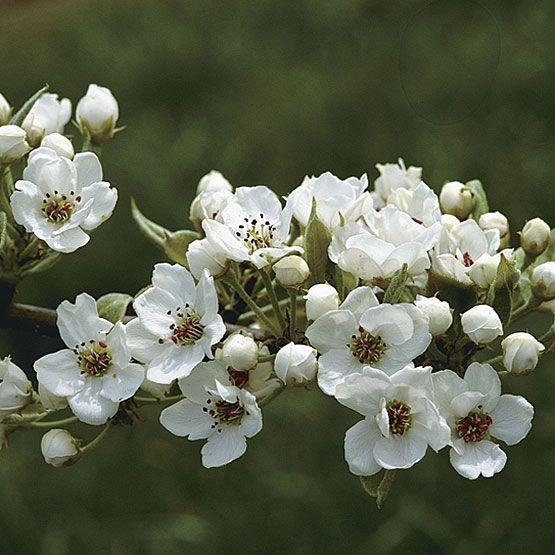 Best Flower Borders Cottage Gardens Images On Pinterest