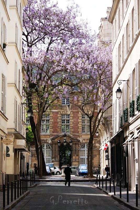 VI Paris, France - The place de Furstenberg is famous as one of the most charming squares in Paris. It is in fact a street. The small square is planted with four pawlonias.