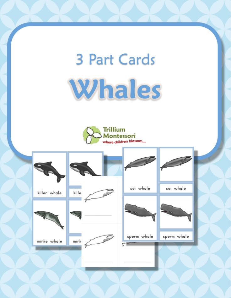 Types of Whales- Montessori 3 Part Cards with color illustrations and blacklines too.  {FREE}