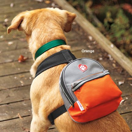 17 Best ideas about Dog Backpack on Pinterest | Pet travel, Dog ...