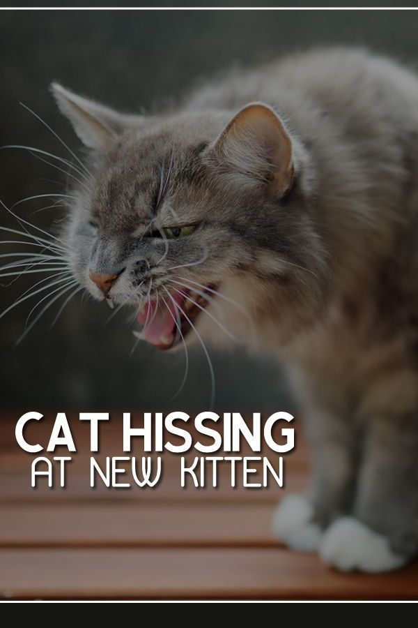 Pin On Cat Behavior