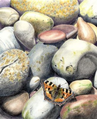 Tortoiseshell on Pebbles by Beverley Lewis