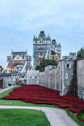 Una foto más con las rojas amapolas de cerámica en la Torre de Londres, para homenajear a los caídos en la 1a. Guerra Mundial.