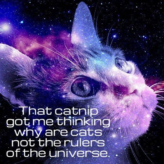 Cats are great philosophers #philosophy #catnip #purple #color #theme #meme. #photo #bestbuy http://quotags.net/ipost/1644811492863171360/?code=BbTi1aSltsg