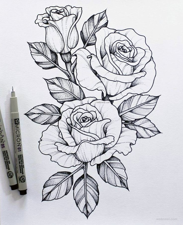45 Stunning Flower Drawings and Sensible Coloration Pencil Drawings