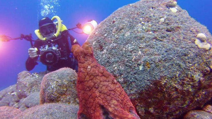 Underwater Photographer Plays Hide+Seek with an Octopus [VIDEO] — #Photography via @petapixel