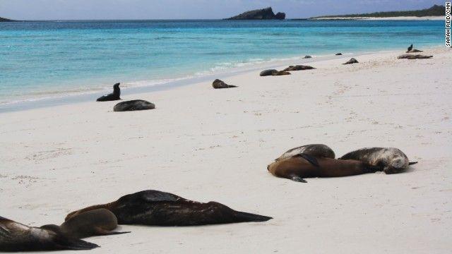 4 ガラパゴス諸島(エクアドル) 写真=SARAH REID/CNN ▼15Jun2013CNN 写真特集:一度は行きたい世界遺産20選 http://www.cnn.co.jp/photo/35032669.html