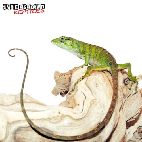 2480 Best Images About Reptile Stuff! On Pinterest