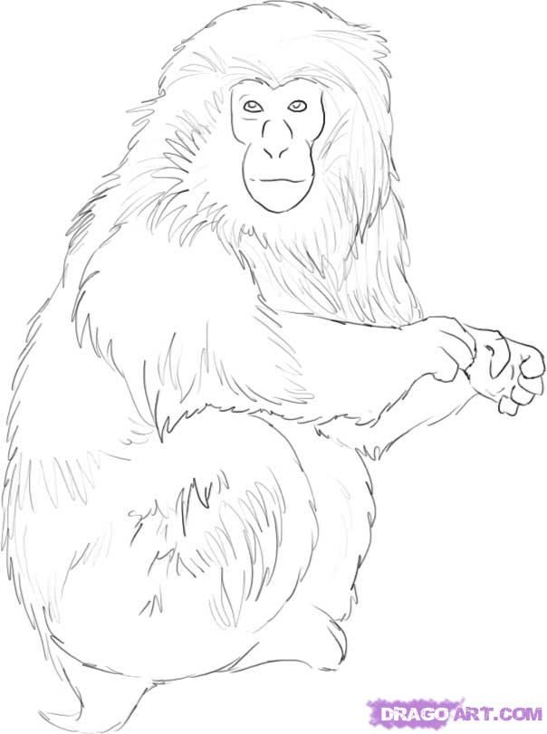 How To Draw A Japanese Snow Monkey