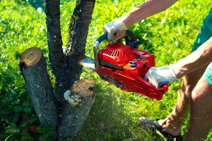 Tree Trimming Miramar FL | Professional Tree Trimming Service