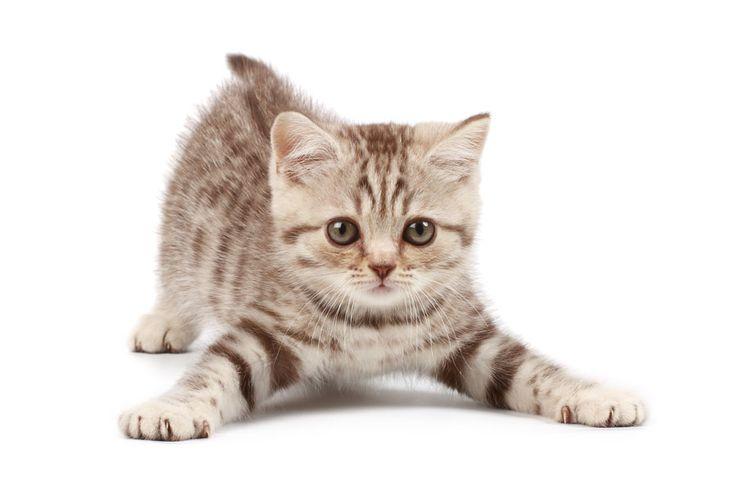 ***Remedios Caseros para Ahuyentar Gatos*** Para alejar a los gatos de las zonas donde corran peligro o donde no quieres que se acerquen, prueba con estos remedios caseros, naturales y que no les harán daño alguno....SIGUE LEYENDO EN ..... http://comohacerpara.com/remedios-caseros-para-ahuyentar-gatos_18140h.html
