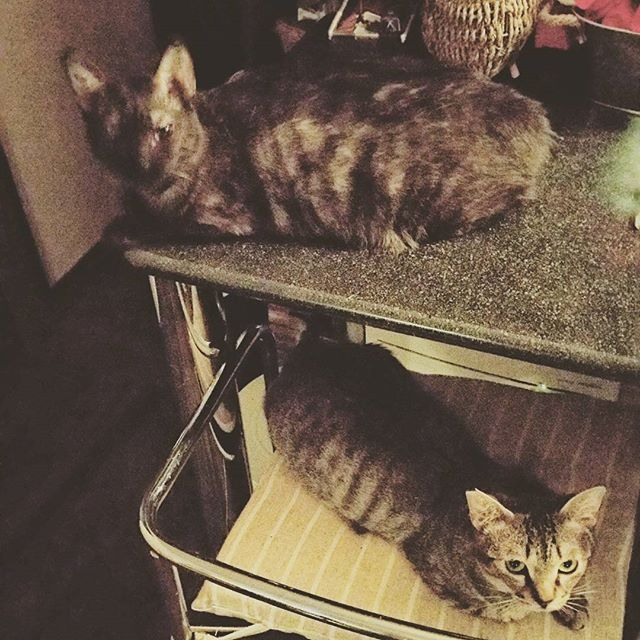 #おやすみなさい #favoritecat#lovecats#愛猫#ネコ#猫#ネコ部#猫クラブ#小鉄#小冬#コテツ#コフユ#東京#足立区#足立区扇#ニャンコ#cat#cats
