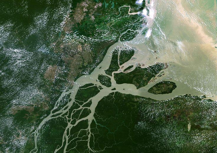 Actu : Un immense récif corallien découvert à l'embouchure de l'Amazone