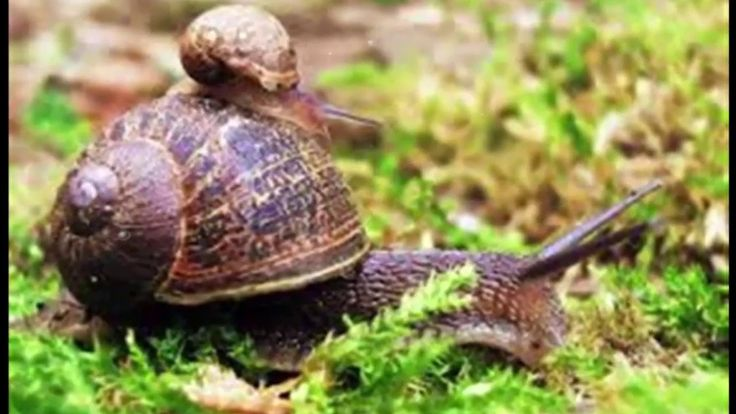 Snail  In The Worlds | Most Amazing Colorful Beautiful Land Snail