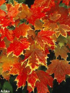Осенние листья - анимация на телефон №1288210