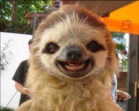 sloth - look at those perfect teeth!
