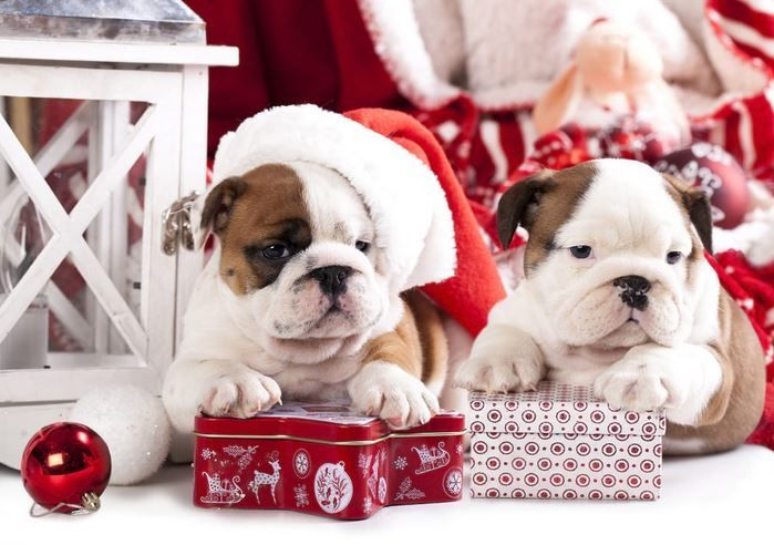 Christmas Gifts And Diy Supplies For Dogs Cats Birds Horses And