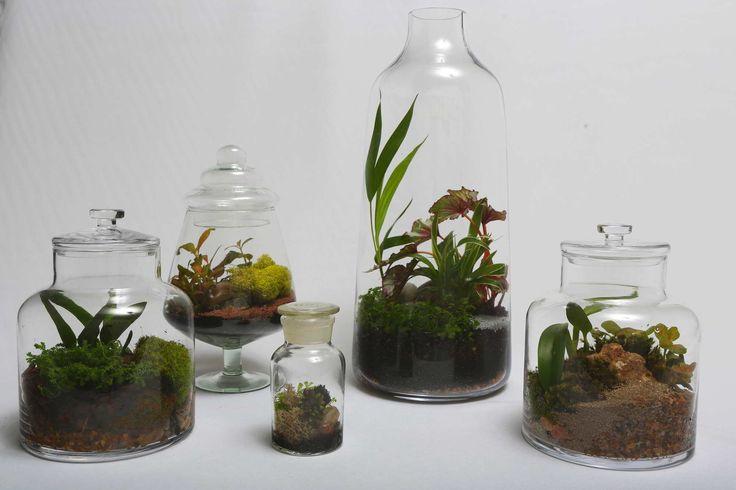 Terrário: paisagem no vidro – Revista Natureza