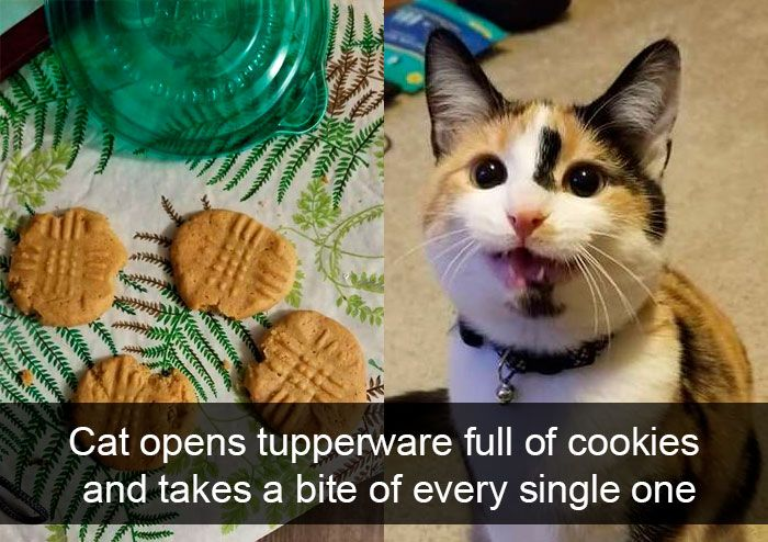 Cat Snapchat Funny Cats Funny Cats Cute