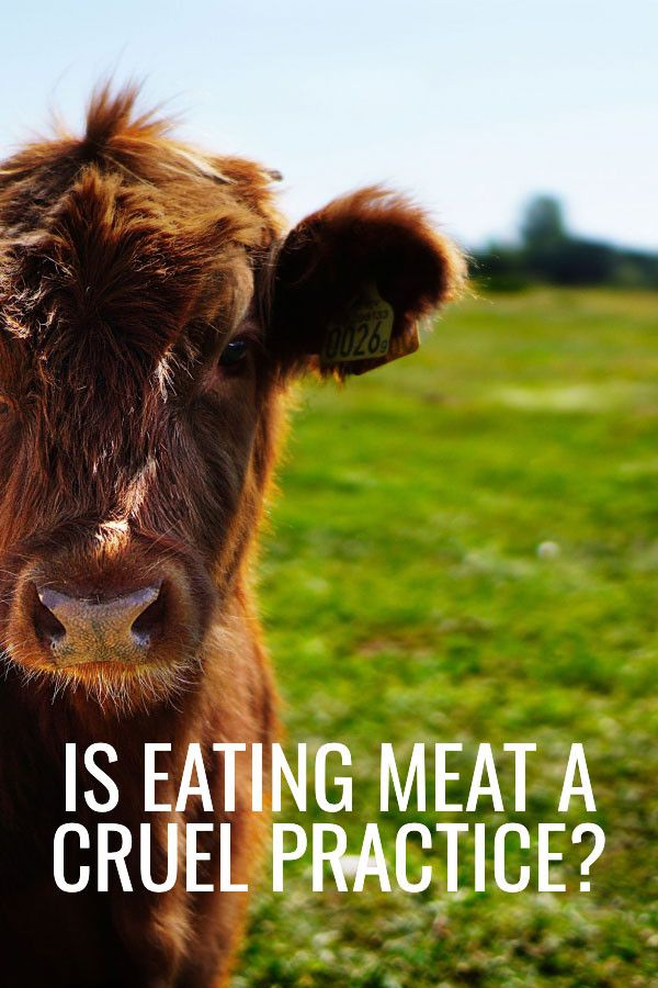 Is Meat Eating A Cruel Practice We Look At The Meat Vs Vegetarianism Debate From The Point Of View Of Biology And Animal Wel Animals Animal Photo Cow Pictures
