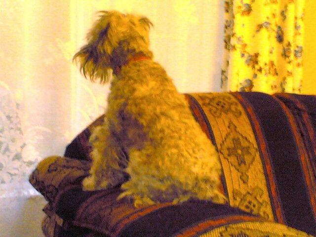 Gigi watching the world.